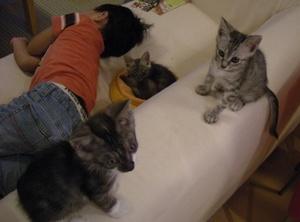 201010_cats1.JPG