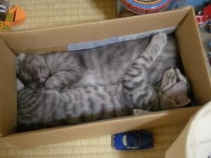 201010_cats2.JPG